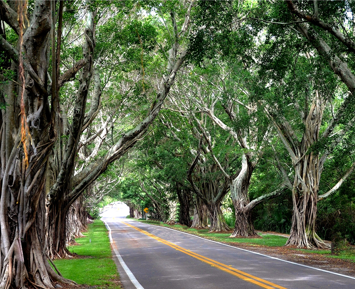 Bridge Road Banyan Walk